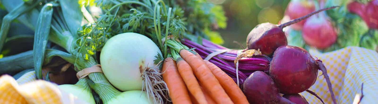 charlas y talleres nutricionales nutricion